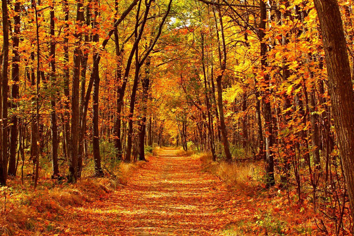 Foto van herfst bos